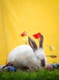 Κουνέλι Πάσχας με τα αυγά στο κίτρινο υπόβαθρο Στοκ Φωτογραφίες
