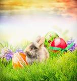 Κουνέλι Πάσχας στη χλόη με τα αυγά και τα λουλούδια άνοιξη, κάρτα Πάσχας Στοκ Φωτογραφίες