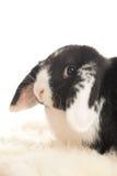 Κουνέλι που φαίνεται ευθύ στο φακό Στοκ φωτογραφίες με δικαίωμα ελεύθερης χρήσης