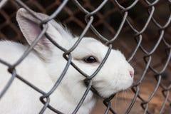 Κουνέλι σε ένα κλουβί Στοκ φωτογραφία με δικαίωμα ελεύθερης χρήσης