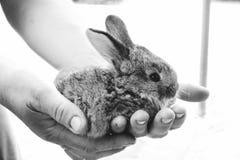 Κουνέλι στα θηλυκά χέρια Στοκ εικόνες με δικαίωμα ελεύθερης χρήσης