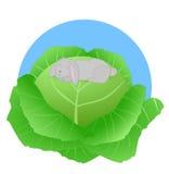 Κουνέλι στο λάχανο διανυσματική απεικόνιση