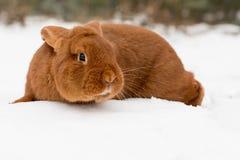 Κουνέλι στο χιόνι Στοκ εικόνες με δικαίωμα ελεύθερης χρήσης