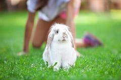Κουνέλι της Pet στη χλόη στο πάρκο Στοκ φωτογραφία με δικαίωμα ελεύθερης χρήσης