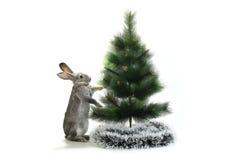 Κουνέλι Χριστουγέννων Στοκ φωτογραφίες με δικαίωμα ελεύθερης χρήσης