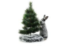 Κουνέλι Χριστουγέννων Στοκ Φωτογραφία
