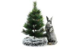 Κουνέλι Χριστουγέννων Στοκ εικόνες με δικαίωμα ελεύθερης χρήσης