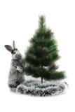 Κουνέλι Χριστουγέννων Στοκ Εικόνα