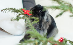 Κουνέλι Χριστουγέννων Στοκ εικόνα με δικαίωμα ελεύθερης χρήσης