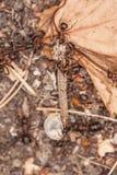 Κουνούπι και ands Στοκ φωτογραφίες με δικαίωμα ελεύθερης χρήσης