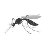Κουνούπι με το απότομο χτύπημα που απομονώνεται στο άσπρο υπόβαθρο Ιός Zika διανυσματική απεικόνιση