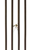 Κουνούπι νεκρό από το δολοφόνο κουνουπιών Στοκ εικόνες με δικαίωμα ελεύθερης χρήσης