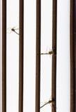 Κουνούπι νεκρό από το δολοφόνο κουνουπιών Στοκ Εικόνα