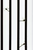 Κουνούπι νεκρό από το δολοφόνο κουνουπιών Στοκ εικόνα με δικαίωμα ελεύθερης χρήσης