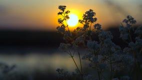 Κουνούπι που πηγαίνει στον ύπνο κοντά στον ποταμό στο ηλιοβασίλεμα φιλμ μικρού μήκους