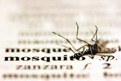 κουνούπι Στοκ φωτογραφία με δικαίωμα ελεύθερης χρήσης