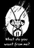 Κουρασμένα δυστυχισμένα mantis Στοκ Εικόνες