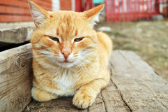 Κουρασμένη γάτα Στοκ εικόνες με δικαίωμα ελεύθερης χρήσης