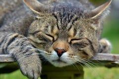 Κουρασμένη γάτα skateboard Στοκ Φωτογραφίες