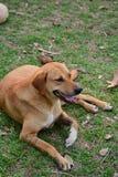 Κουρασμένη συνεδρίαση σκυλιών Στοκ εικόνες με δικαίωμα ελεύθερης χρήσης