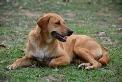 Κουρασμένη συνεδρίαση σκυλιών Στοκ φωτογραφίες με δικαίωμα ελεύθερης χρήσης