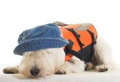 Κουρασμένος ναυτικός - σκυλί με το σακάκι ζωής και το καπέλο Στοκ εικόνες με δικαίωμα ελεύθερης χρήσης