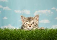 Κουρασμένο τιγρέ γατάκι στη χλόη Στοκ Εικόνες