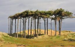 κουρεψτε τον αέρα Στοκ εικόνες με δικαίωμα ελεύθερης χρήσης