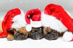 Κουτάβια που κοιμούνται στα καπέλα Χριστουγέννων στοκ εικόνες με δικαίωμα ελεύθερης χρήσης