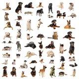κουτάβια σκυλιών γατών Στοκ φωτογραφία με δικαίωμα ελεύθερης χρήσης