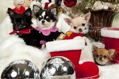 κουτάβια Χριστουγέννων στοκ εικόνα