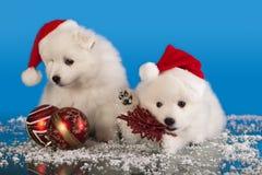 Κουτάβια Χριστουγέννων Στοκ φωτογραφία με δικαίωμα ελεύθερης χρήσης