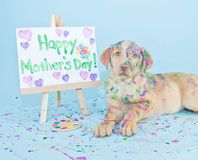 Κουτάβι ημέρας της ευτυχούς μητέρας Στοκ φωτογραφία με δικαίωμα ελεύθερης χρήσης