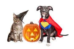 Κουτάβι και γατάκι αποκριών με Pupmkin Στοκ Φωτογραφίες
