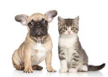 Κουτάβι και γατάκι Στοκ Εικόνα