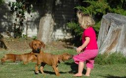 κουτάβι κατοικίδιων ζώων παιδιών Στοκ εικόνες με δικαίωμα ελεύθερης χρήσης