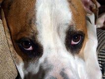 κουτάβι λυπημένο Στοκ φωτογραφία με δικαίωμα ελεύθερης χρήσης