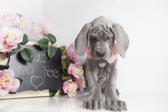 Κουτάβι με ένα μήνυμα της αγάπης Στοκ φωτογραφίες με δικαίωμα ελεύθερης χρήσης