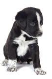 κουτάβι σκυλιών που κάθ&epsi Στοκ εικόνα με δικαίωμα ελεύθερης χρήσης