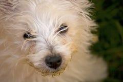κουτάβι σκυλιών Στοκ Φωτογραφίες