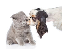 Κουτάβι σπανιέλ κόκερ που γλείφει τη γάτα η ανασκόπηση απομόνωσε το λευκό Στοκ εικόνες με δικαίωμα ελεύθερης χρήσης