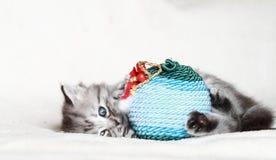 Κουτάβι της σιβηρικής γάτας με τη σφαίρα Χριστουγέννων Στοκ φωτογραφία με δικαίωμα ελεύθερης χρήσης