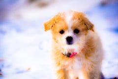 Κουτάβι το χειμώνα στοκ φωτογραφίες
