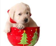 κουτάβι Χριστουγέννων Στοκ φωτογραφία με δικαίωμα ελεύθερης χρήσης