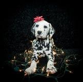 Κουτάβι Χριστουγέννων Στοκ Φωτογραφίες