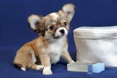 Κουτάβι Chihuahua με την καλλυντική τσάντα Στοκ Εικόνα