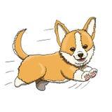 Κουτάβι Corgi που τρέχει με πλήρη ταχύτητα Απεικόνιση χαρακτήρα κινουμένων σχεδίων Στοκ Εικόνα