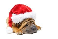 Κουτάβι pei της Shar στο καπέλο Χριστουγέννων Στοκ Εικόνα