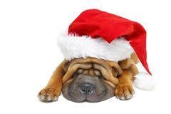 Κουτάβι pei της Shar στο καπέλο Χριστουγέννων Στοκ φωτογραφίες με δικαίωμα ελεύθερης χρήσης