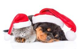 Κουτάβι Rottweiler και μικρό γατάκι στα καπέλα Χριστουγέννων που βρίσκονται togeth Στοκ Φωτογραφίες